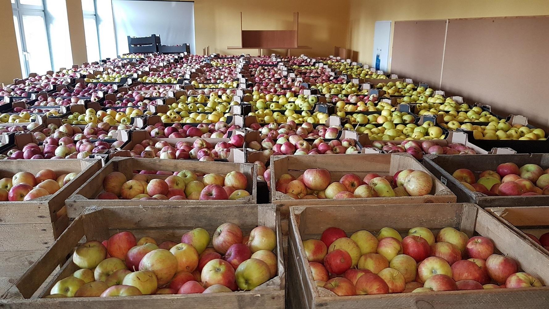 Ilustracja do informacji: Jabłka dla jednostek organizacyjnych pomocy społecznej i podopiecznych